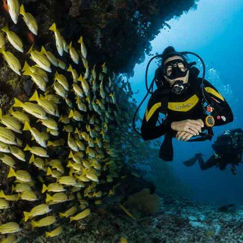 Scuba diving instructor Sun Valley CA