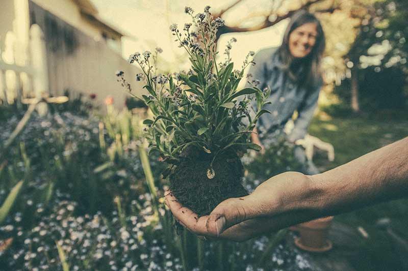 Jose Mier holds seedling in Sun Valley, CA garden